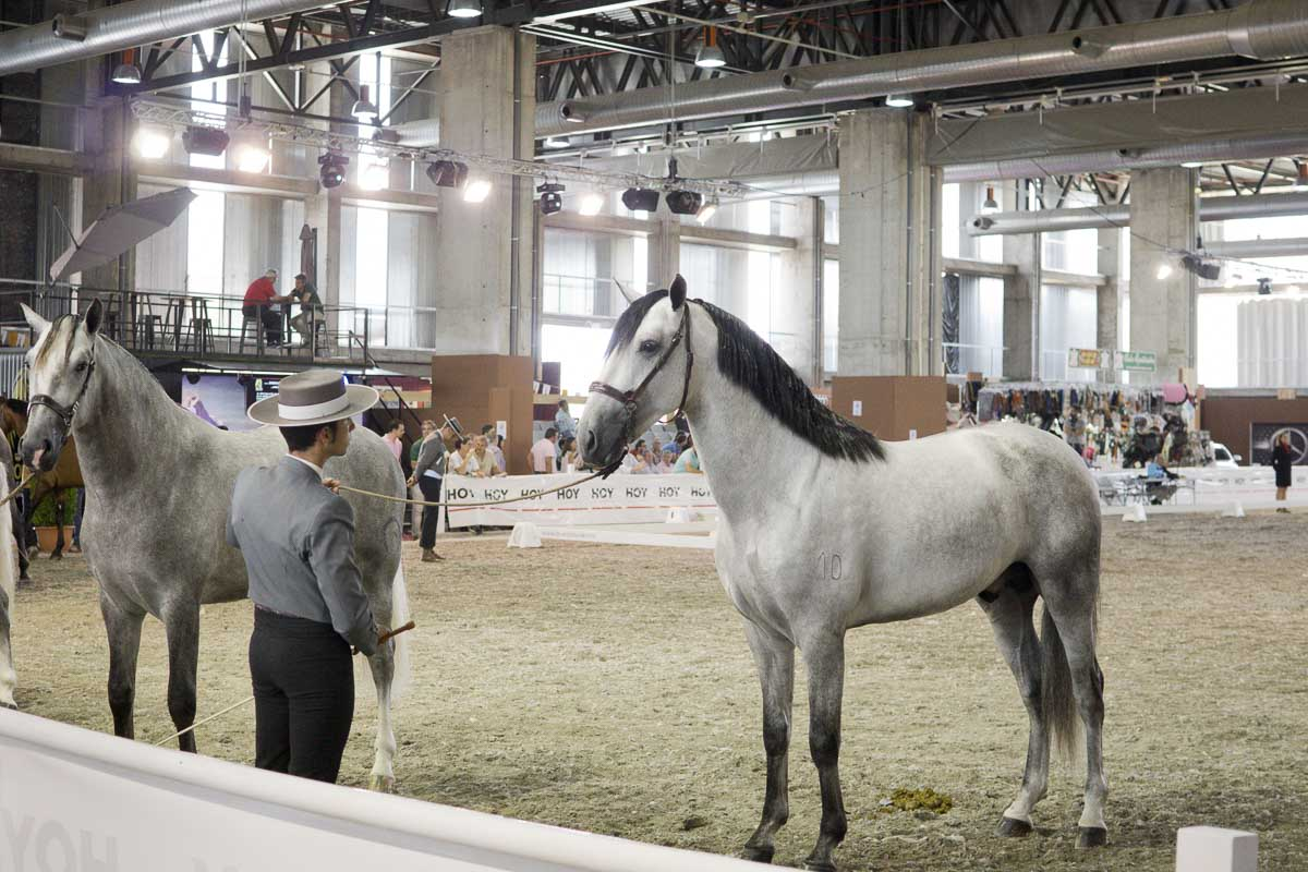 Ecuextre - Feria del caballo y el toro - SUSPENDIDO-